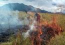 Este año los incendios forestales en el Huila han consumido 490 hectáreas de cobertura vegetal.