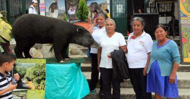 San Agustín celebra Festival Nacional del Oso y la Danta.