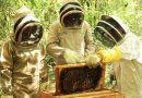 Proyectos apícolas de Villevieja y Baraya, de la mano con la CAM.