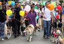 Animalistas saldrán a marchar en Neiva por los derechos de los animales.