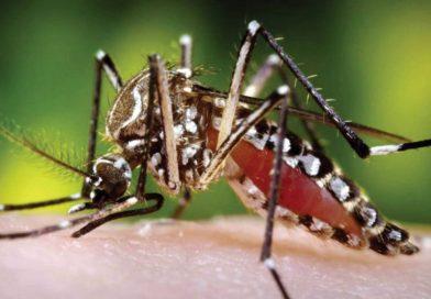 Alerta en más de 700 municipios de Colombia por brotes de dengue en esta semana santa