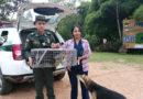 Jornada contra el maltrato animal en Pitalito