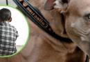 Perro Pitbull destrozó rostro a niño venezolano en Pitalito