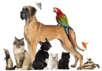 Se aprobó el proyecto de política pública de protección y bienestar animal en Neiva